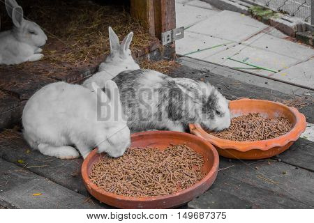 Rabbit And Food.