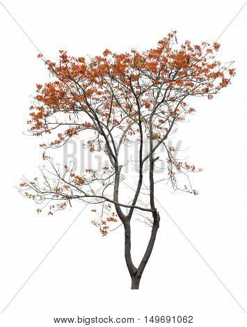 Tree and flower red Isolated on white background. Tree object element for design.
