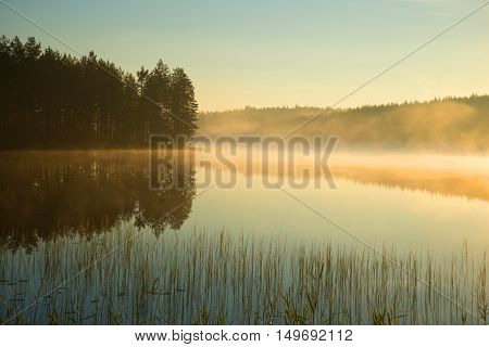 Misty august morning on forest lake. Finland