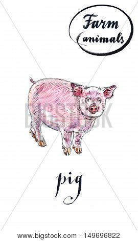 Cheerful young piglet hand drawn - watercolor Illustration