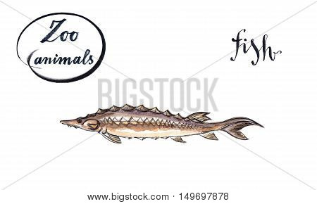 Sturgeon fish wild life animal hand drawn - watercolor Illustration