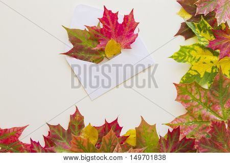 Open white envelop and colourful fall leaves with frame on white background. Close up. Autumn concept.