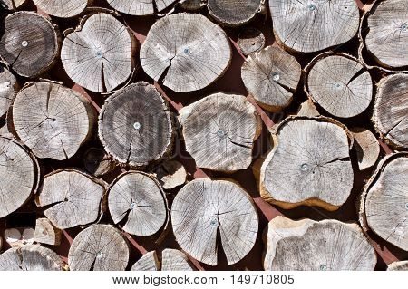 Full Frame Of Sawed Log Ends