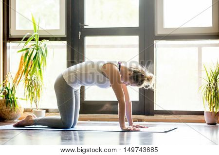 Full length portrait of attractive young woman working out at home in living room, doing yoga or pilates exercise on mat. Cat Pose, Marjaryasana, asana paired with Cow Pose on the inhale. Side view