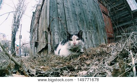 Stray cat sitting on the street near an abandoned house