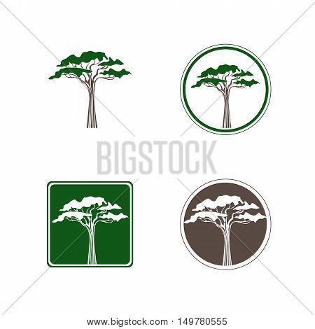 Abstract Single Acacia Tree Logo Design Collection Over White