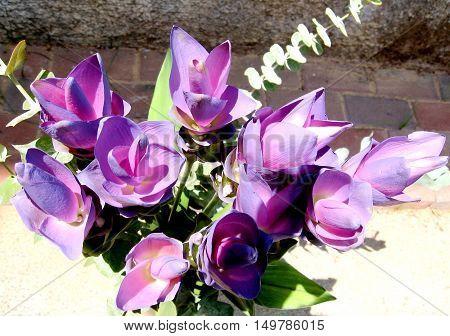Bouquet of Curcuma flowers in Or Yehuda Israel August 16 2007