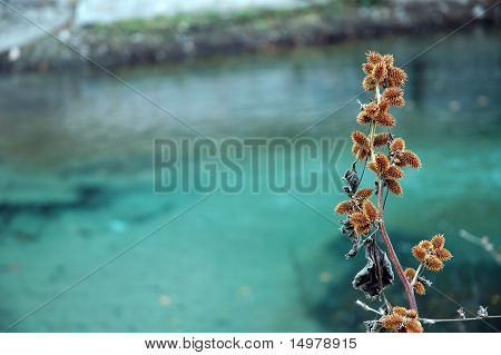 dry plant and tirquoise river