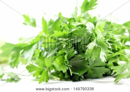 Bundle Of Fresh Italian Parsley
