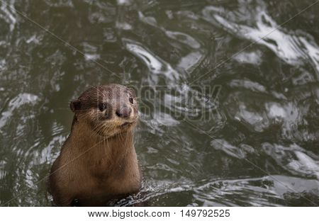 A little otter standing and waiting for food