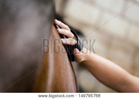 Closeup, Woman Is Currying A Brown Horse