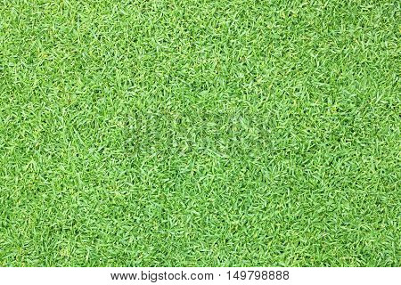Grass Lawn Background