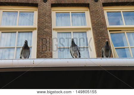Pigeons sitting on the roof of brick city building with windows