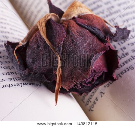 Dried Rose Over Book