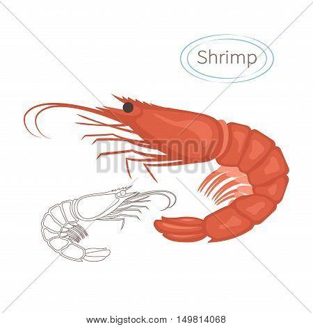 Royal red shrimp set with caption. Isolated illustration on white background. Seafood symbol. Vector illustration.