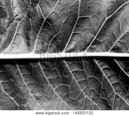 Black And White Leaf Texture.