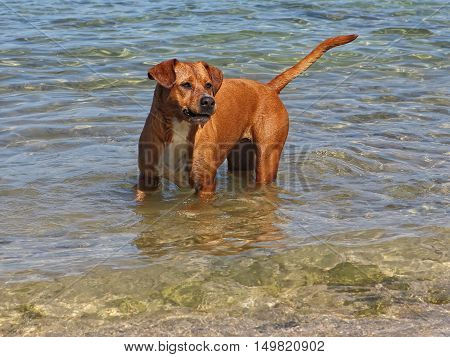 Beautiful dog in the sea at the beach