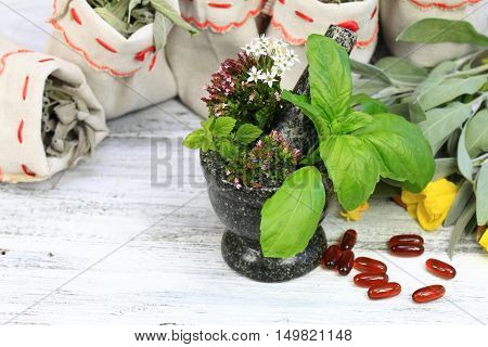 Mortar with fresh oregano basil and balm sage herb and evening primrose flower on right dried medicinal and culinary herbs in bags