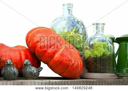 Autumn still life with harvested pumpkins glass jars with plants and ceramic birds