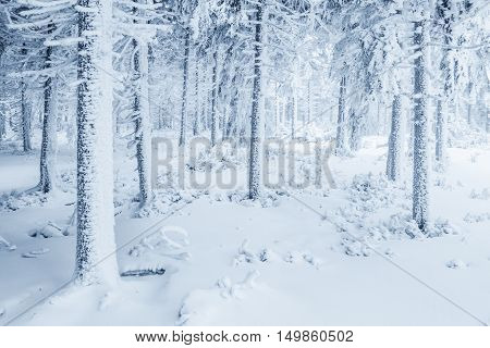 A harsh winter somewhere in polish mountains.