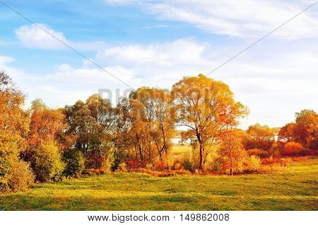 Sunset autumn view of autumn park lit by sinlight. Autumn nature landscape-yellowed autumn park in autumn sunny weather. Picturesque autumn view of autumn park. Autumn nature in autumn sunlight