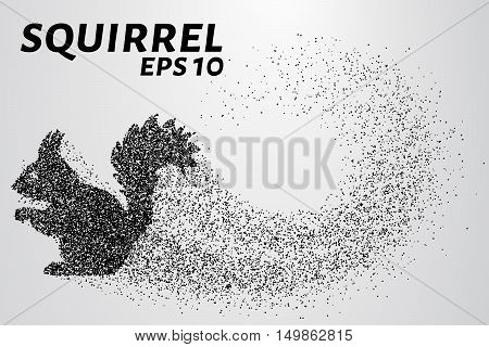 The squirrel from the particles. Silhouette of squirrel consists of small circles.