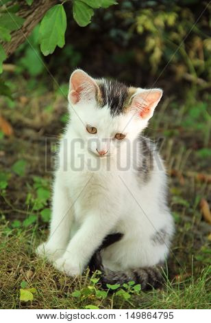 cute white kitten with some gray spots sitting in the garden