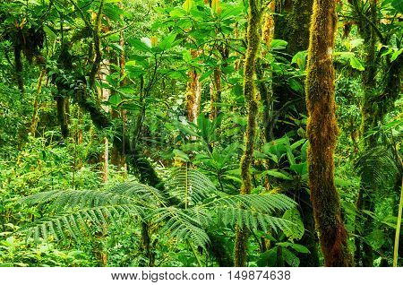 Beautiful green tropical rainforest of Central America