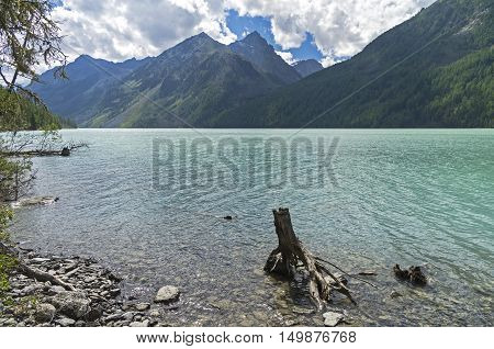 Stump in the water near the shore of the lake. Kucherla lake. Altai Mountains Russia. Sunny summer day.