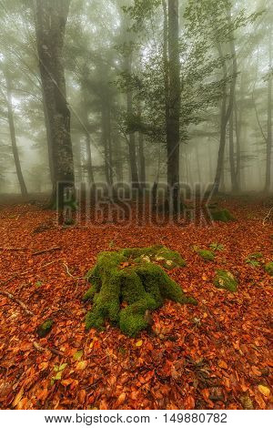 Autumn is comming, misty forest in Entzia