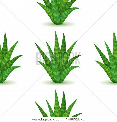 Aloe vera - seamless pattern with desert plants. Nature floral background with green succulent leaf. Wallpaper with plantation of aloe. Vector illustration