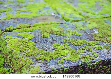 Green Mos On Dirty Concrete, Green Mos Background, Stone With Green Mos,