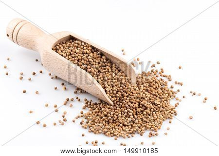 Coriander Seeds In Wooden Scoop
