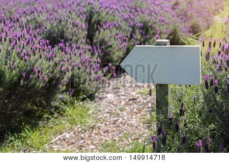 Rustic signpost copy space background on Australian lavender field