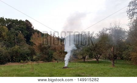Smoky campfire left without supervision between trees