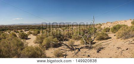 Dead Tree In Open Desert