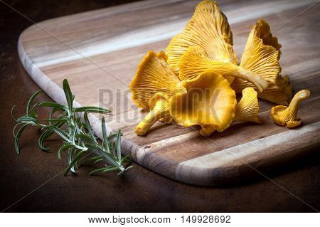 Rosemary With Cantharellus. Yellow Chanterelle