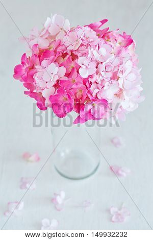 Beautiful pink hydrangea flowers in a vase on a table.