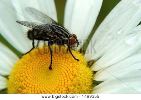 Fly  Flower81