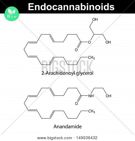 Endocannabinoids chemical molecular structures signaling molecules 2d vector illustration eps 8