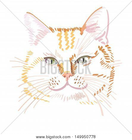 Vector illustration of red cat isolated on white background