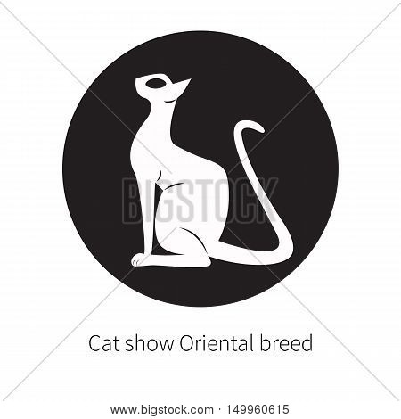 Oriental shorthair cat isolated. Flat logo domestic cat with large ears and eye. Black silhouette eastern egyptian cat. Elegant circle badge label sticker for cat show oriental breed.
