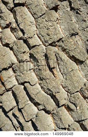 Old tree bark. Wooden texture. Natural background.