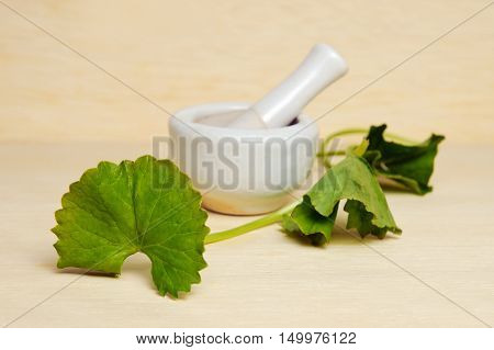 Centella Asiatica Or Thankuni In Indian, Buabok Leaf In Thailand Isolated On Wooden Board