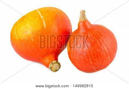 Pumpkins red kuri hokkaido isolated on white