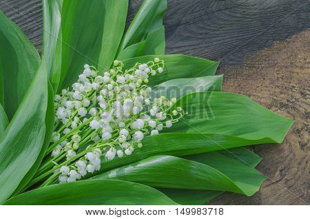 Lilies Of Valley White Spring Flower