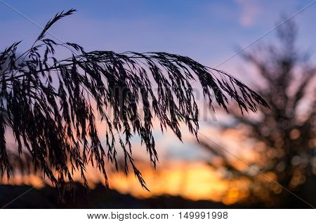 Blade of grass silhouettes at quiet sunset