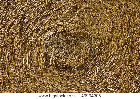 Close up of ground. Texture of straw/Hay ball background