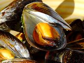 Cooked Mussels poster