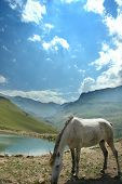 Grey Horse Near The Small Lake In The Summer poster